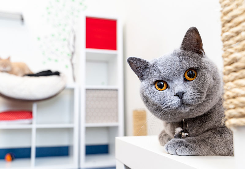 Pets Health Check